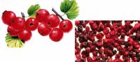 Сублимированная смородина красная (цельная ягода) 50г